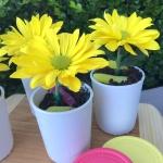 Ray of Sun Flower Pot Sundaes Zoom