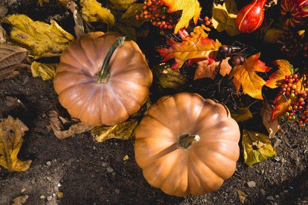 pumpkin-autumn-fall